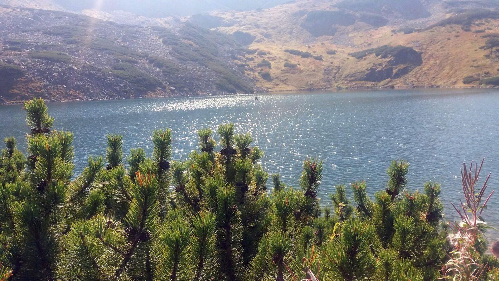 Góry czarny staw morskie oko jezioro świerk mojelato słońce woda