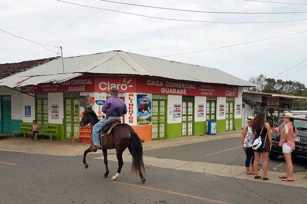 Koń Panama jeździec