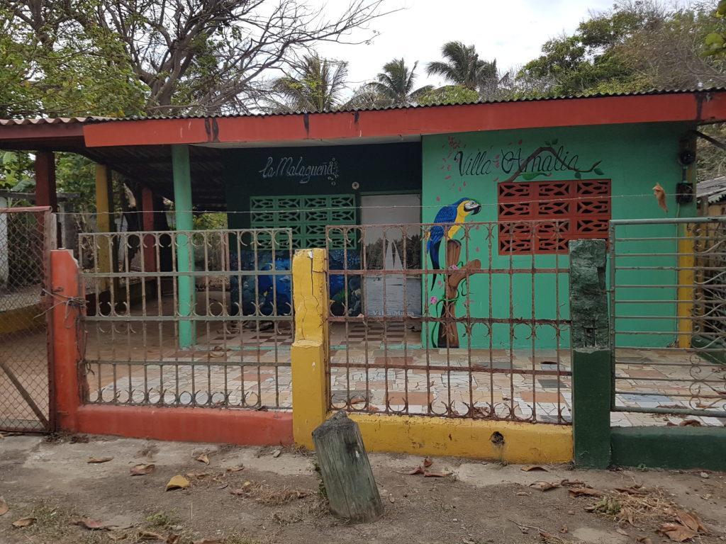 kolorowe domki Panama willa papuga ara